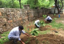 Over 25,000 saplings of trees and shrubs planted during Massive Tree Plantation Drive in New Delhi area.