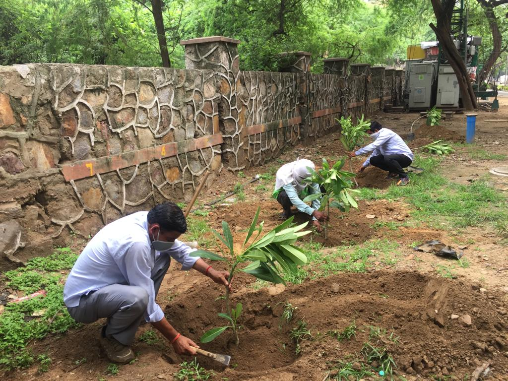 Over 25,000 saplings of trees and shrubs planted