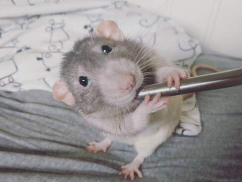 Mouse painting viral social media Amalie Markota Andersen earning money