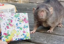 Mouse showed amazing skills, earned 94 thousand rupees by painting